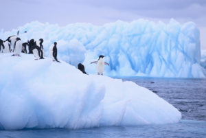 Adelie Penguins Clustered on an Iceberg --- Image by © Royalty-Free/Corbis
