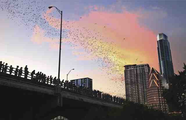 The urban bat colony flying out from beneath the Ann W. Richards Congress Avenue Bridge at dusk in Austin. (Photo: Courtesy of the Austin Convention and Visitors Bureau)