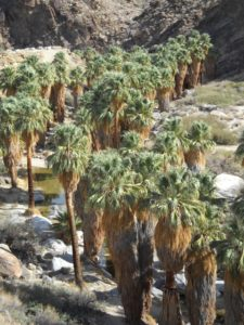 Hiking the Palm Canyon with Desert Adventures in Palm Springs, California. (Photo: Super G)