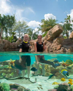 Swim with among tropical fish and rays at the Grand Reef at Discovery Cove in Orlando, Florida. (Photo: Nicole Clausing)