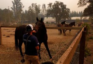 Omid Boostani offers his hand to a horse while trying to get a rope over its neck to get a bridle on it while helping to evacuate 10 horses from a ranch Oct. 11, 2017 in Glenn Ellen, Calif. Emily Putt has been working with her friends since Monday, when the fires broke out, to rescue animals that are being threatened by the fires. (Photo: The Chronicle / Leah Millis )