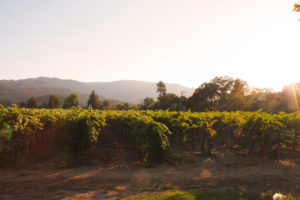 The Whitehall Lane's Leonardini Family Vineyards, Harvest Inn